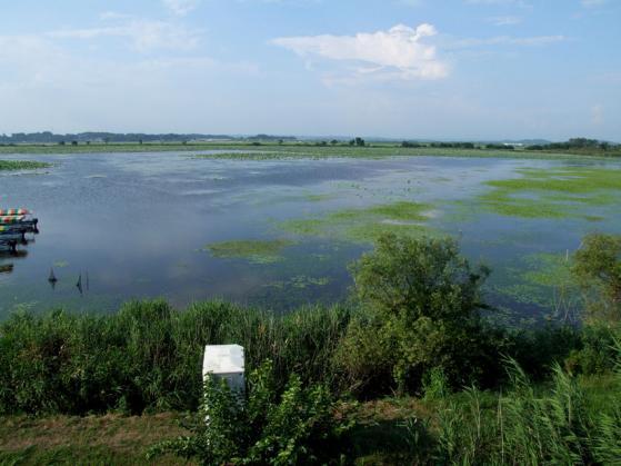 伊豆沼の風景
