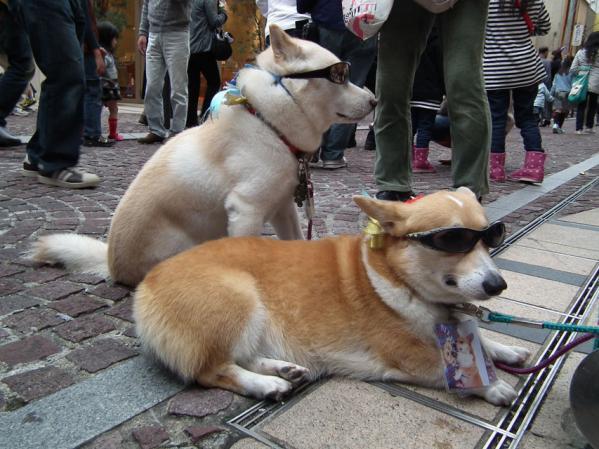 サングラスを掛けた犬