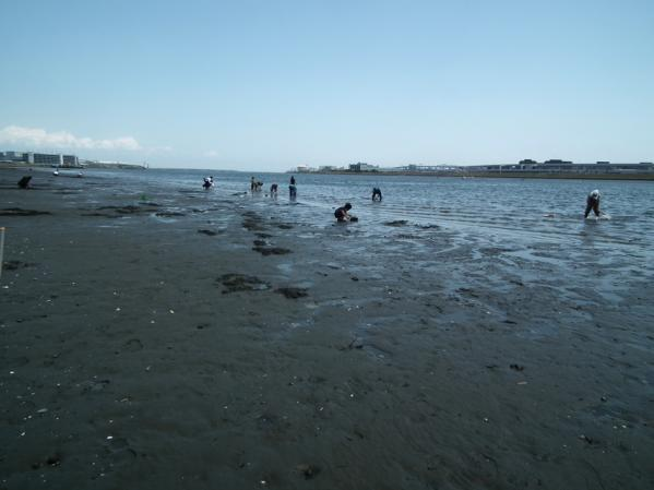 多摩川河口で潮干狩り