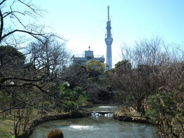 向島百花園の景色と東京スカイツリー