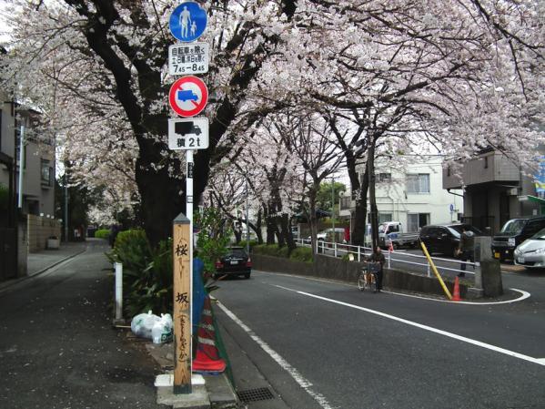 桜坂の碑と桜