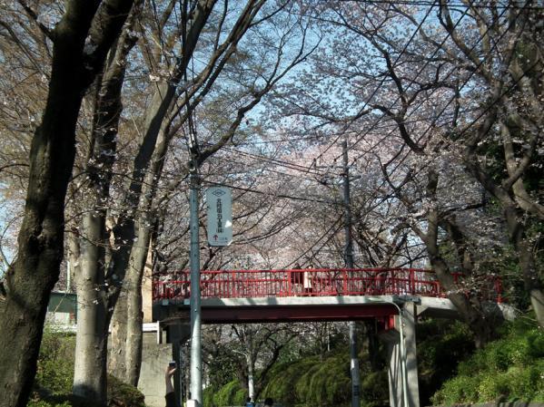 陸橋「桜橋」と桜