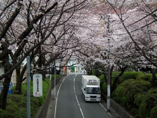陸橋「桜橋」の上から撮影した桜坂の桜