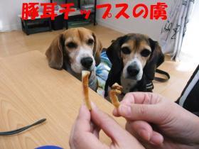 コピー ~ DSCF9331