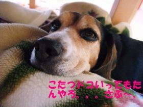 コピー ~ DSCF9346