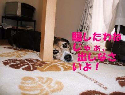 コピー ~ DSCF0934