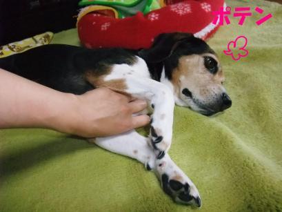 コピー ~ DSCF0946