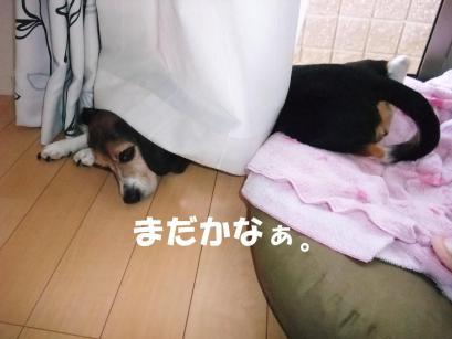 コピー ~ DSCF0968