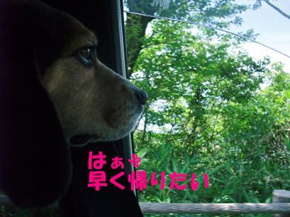 コピー ~ DSCF1212
