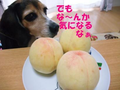 コピー ~ DSCF1237