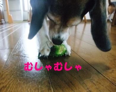 コピー ~ DSCF1417
