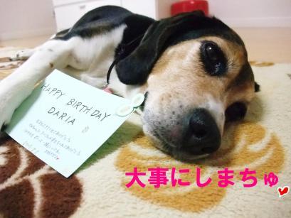 コピー ~ DSCF1600