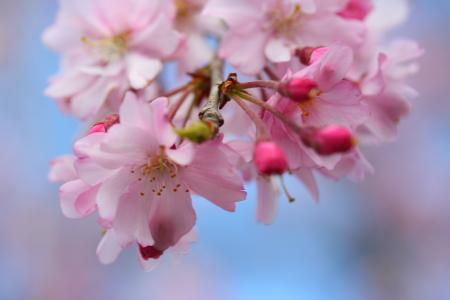 IMG_10452010 桜 7