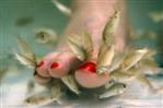 Fish pedi_m.jpg