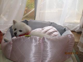 ベッドがお気に入り3