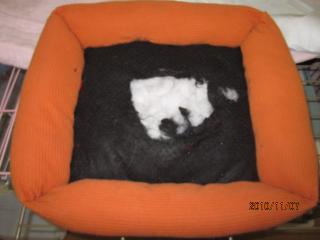 初代ベッド
