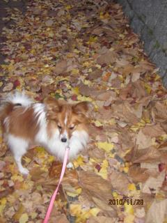 落ち葉の上を散歩・風