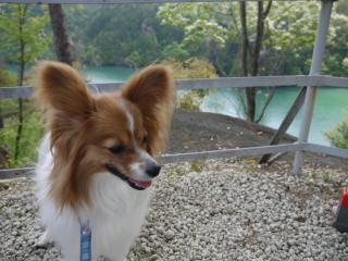 恵那峡にて・風1