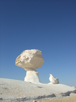 mushroom&chiken