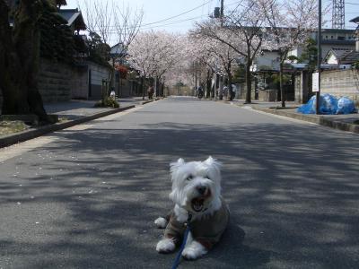 sakuradoritodongurikoen2.jpg