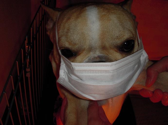 ベラ風邪引き