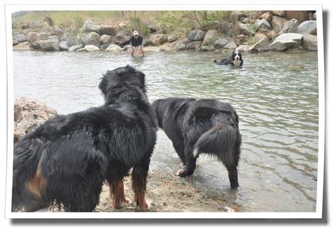 ヤツラの川遊び