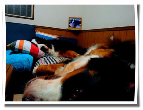 ベッド化するソファ・・・