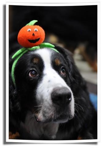 Oかぼちゃ~♡