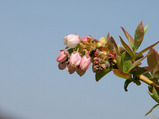 2008開花