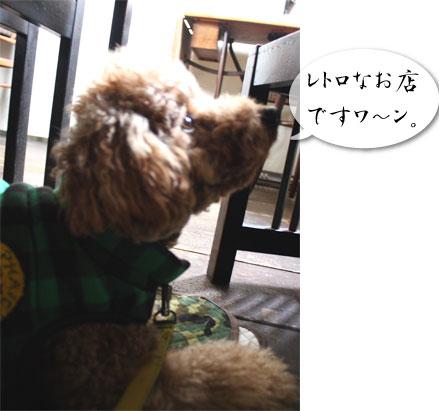 葉山,犬,観光