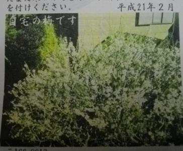 梅(プリンタ不具合)2