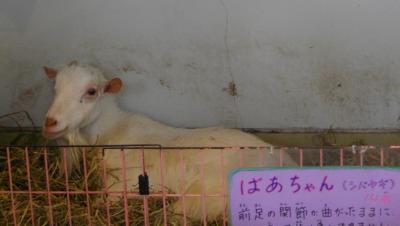 2009北海道72