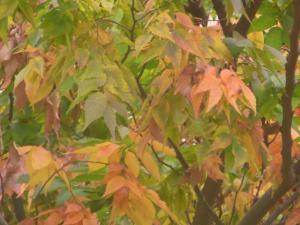 秋の色 4