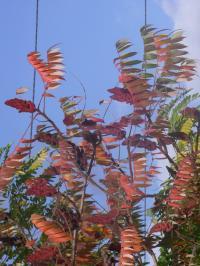 秋の色 12