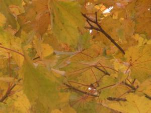 秋の色 5
