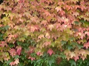 秋の色 6