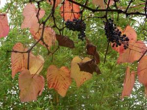 秋の色 9