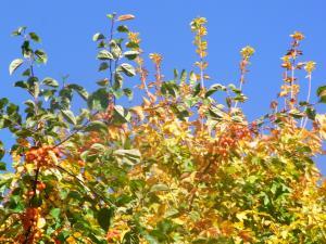 秋の色 14
