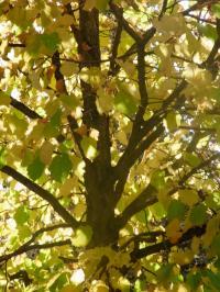 秋の色 15