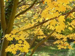 秋の色 16