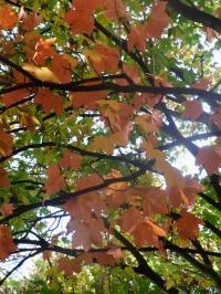 秋の色 17