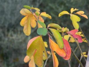 11月秋の色 2