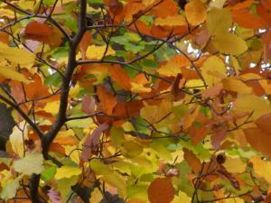 11月秋の色 13