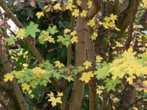 11月秋の色 7