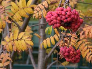 11月秋の色 9