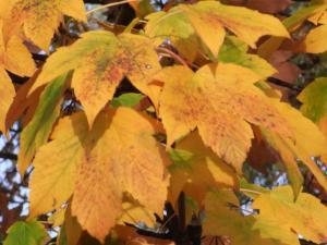 11月秋の色 11