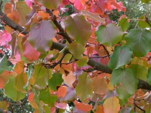 11月秋の色 8