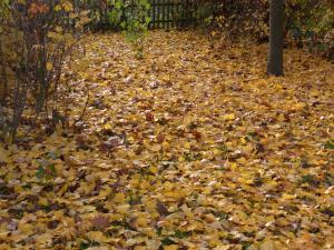 秋の色22