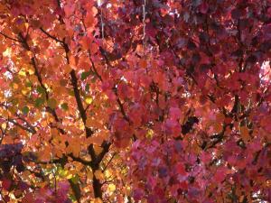 秋の色21