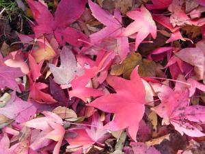 秋の色26